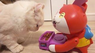 ジバニャンの寝込みを襲う猫【妖怪ウォッチ】 thumbnail