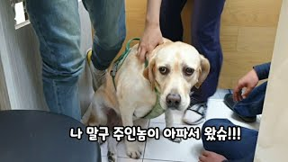 A retriever pretending to be a guardian at+a hospital was caught