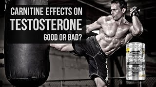 CARNITINE Effects on TESTOSTERONE | Good or Bad?