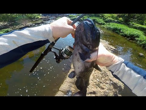 Video Catfishing in rivers