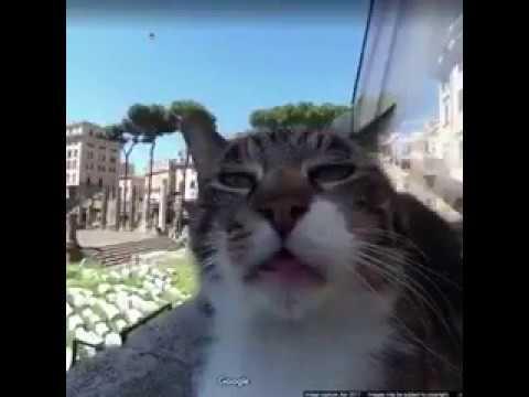 When Cat Meets Google Maps