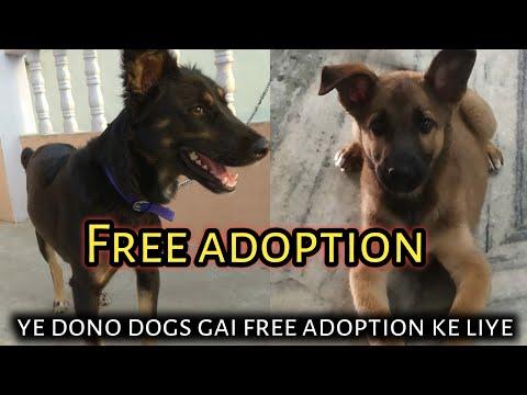 Free adoption dogs ! ye dono mix dog breed hai free adoption ke liye