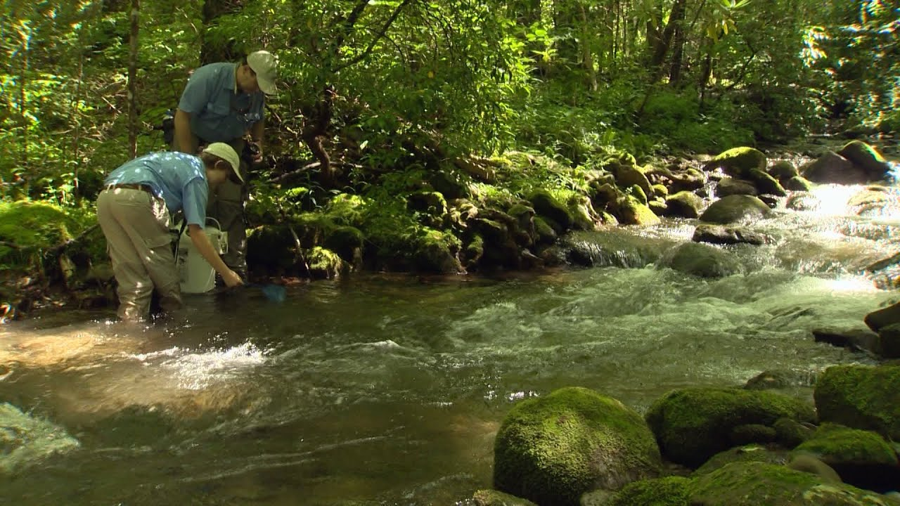 Trout Fishing in Tennessee