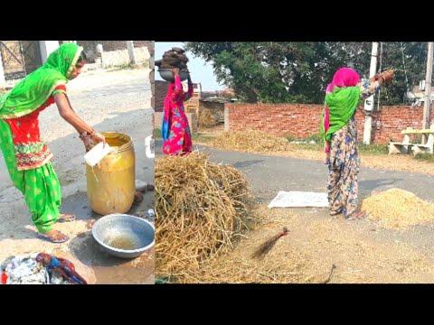 Indian Village Life || Rural life of Punjab/India || Village lifestyle of Punjab/IND