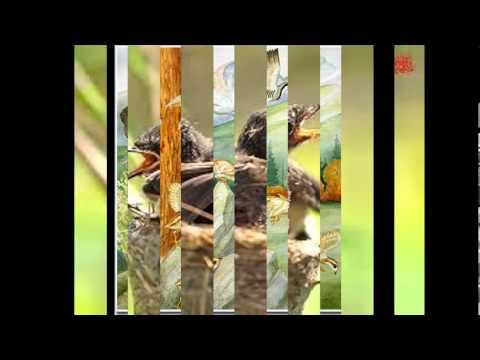Những tập tính của loài chim