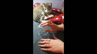 Jadez ASMR Glass  #2 Long Natural Nails Tapping Scratching with my kitten ASMR