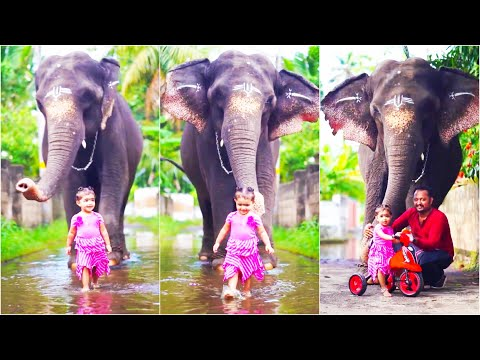 😘 Cute 😍 Baby 👶 Girl with 🐘 Elephant | Malayalam Latest Trending TikTok Videos #TrendingTikTok
