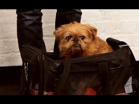How to Bag Train & Travel   Dog Training