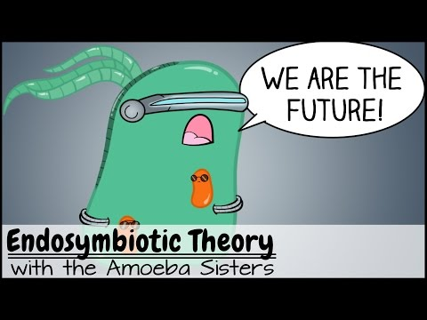 """Thumbnail for the embedded element """"Endosymbiotic Theory"""""""