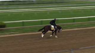 Always Dreaming galloping at Pimlico 2017 05 11