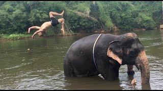 Bath With An Elephant ~Thailand 4K