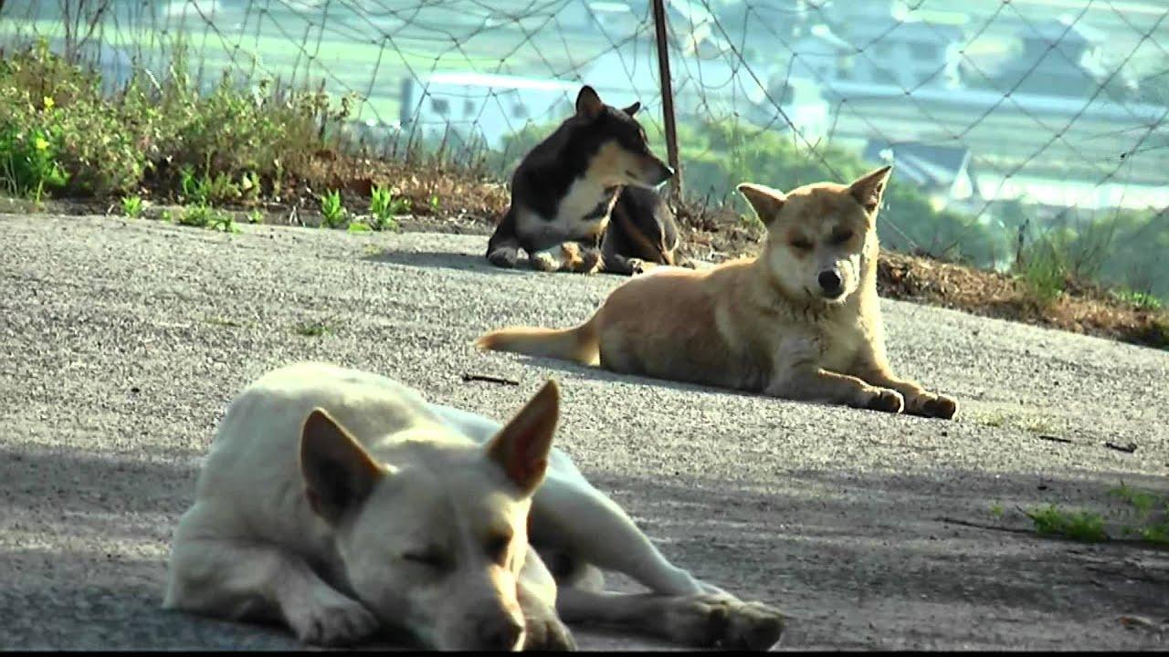 野犬の群れ - YouTube