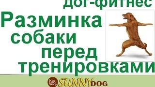 Разминка собаки перед любыми тренировками, выставками и прогулкой. Дог фитнес