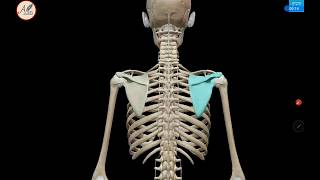 Penyebab dan Cara Mengatasi Nyeri Tulang Belakang dan Sakit Leher Setiap Bangun Tidur.