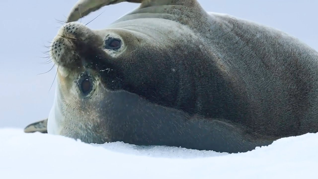 Best Of Oceans   BBC Earth
