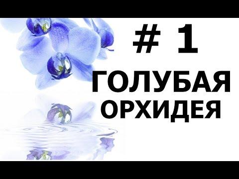 Бисероплетение (Голубая Орхидея 1 ч.) Мастер-класс