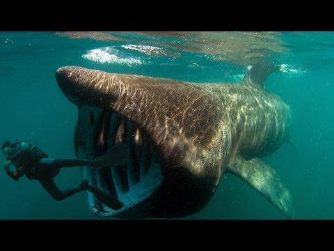 Смотреть Акулы убийцы -