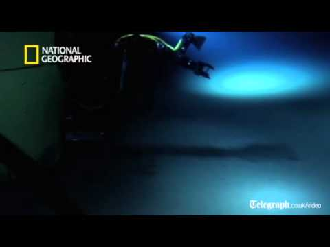 James Cameron's first footage from the deep sea floor
