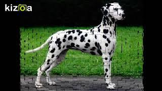 Слайд-шоу: породи і фото собак