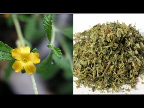 You'll be surprised to know the many benefits you will get From Damiana