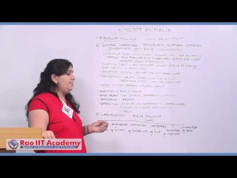 Phylum Arthropoda to phylum Hemichordata - NEET AIPMT AIIMS Zoology Video Lecture