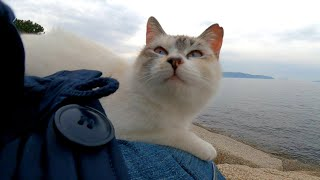 防波堤に座っていたら野良猫が膝の上に乗ってきた