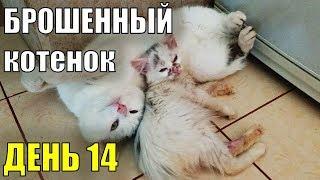 Брошенный котенок  День 14 Спасение бездомного котенка Турецкая ангора?