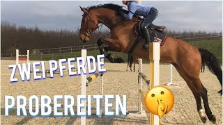 PROBEREITEN von zwei PFERDEN 😍| Immernoch kein Pferd 🤷🏼♀️🤔?| FMA