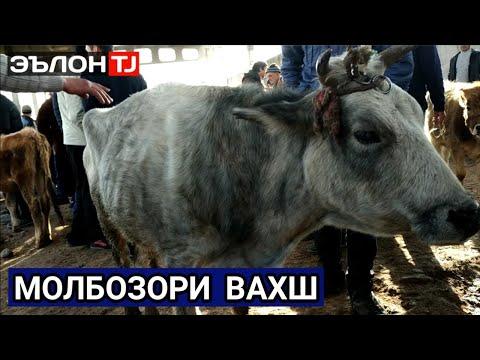 Молбозори Вахш /