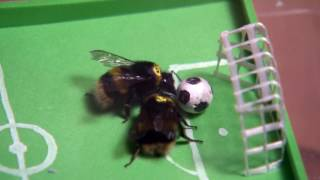 Bees learn how to play soccer | Daily Planet