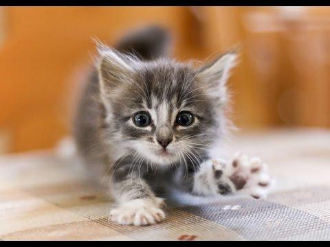 Детская песня Котенок. Песенка про котенка - YouTube