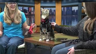 Corey Taylor Talks 11-13-18 Guest: Tommy Cat Santoro