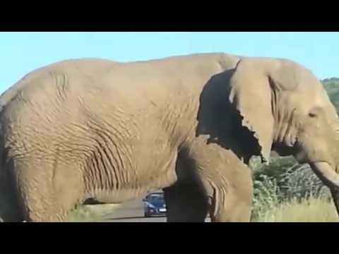 Giant Anaconda Attacks Human,Best eagle attacks Snake,Mongoose,Elephant Attack Humans compilation