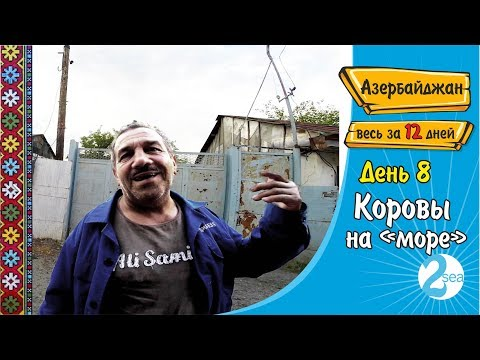 #20. Коровы на 'море'. Вновь азербайджанское гостеприимство. Гах. Загатала. Мингечевир. Кедабек