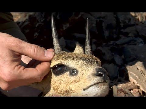 Magnum TV S6:E3 - Desert Quest in Bushmanland (Klipspringer, Gemsbok)