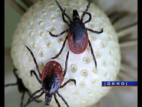 Сибирская язва. Инфекционные болезни