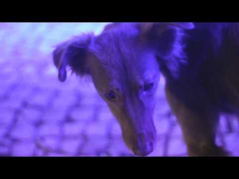 Praso - Raiva de Ontem - Video clip - ( L.E.V. )