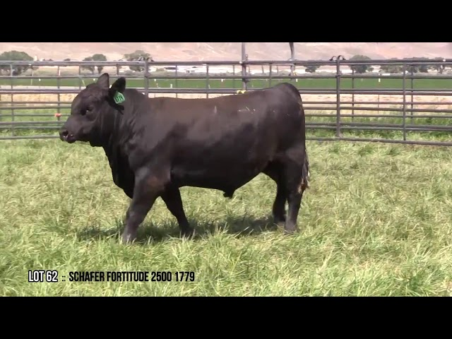 Mid Valley Bull Sale Lot 62