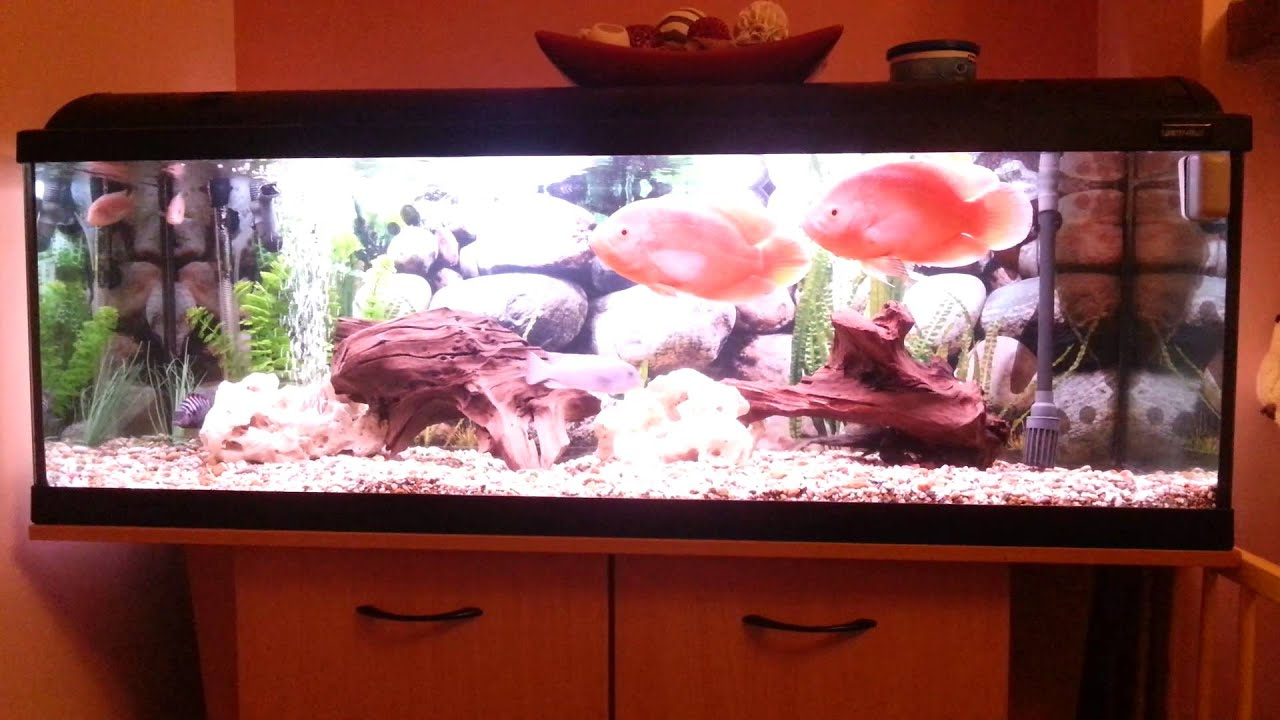 4ft fish tank youtube for Youtube fish tank