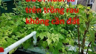 Gambar cover Aquaponic cho người Việt - IBC & TVVN.ORG