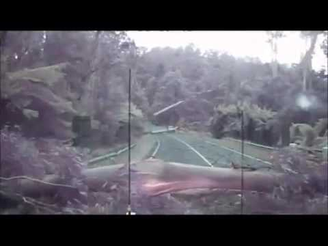 Giant Wind Gust Blows Down Tons of Trees