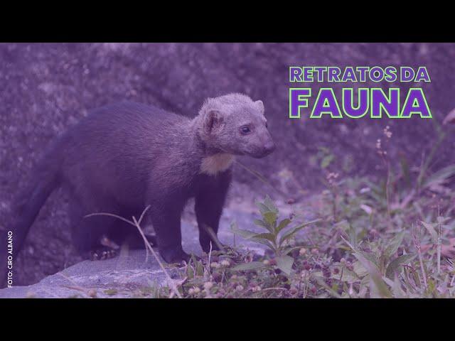 PAPA-MEL - Retratos da Fauna #13