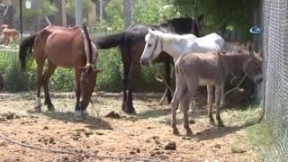 At Ve Eşek Kasaplarına Şok Baskın