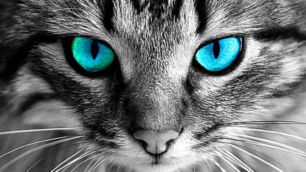 Why You Should Never Look Ito A Cats Eyes