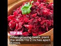 How to Grow Organic Beets from Seed