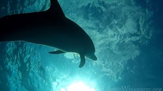 Race to the sky; swimming w/ wild dolphins in Bimini (