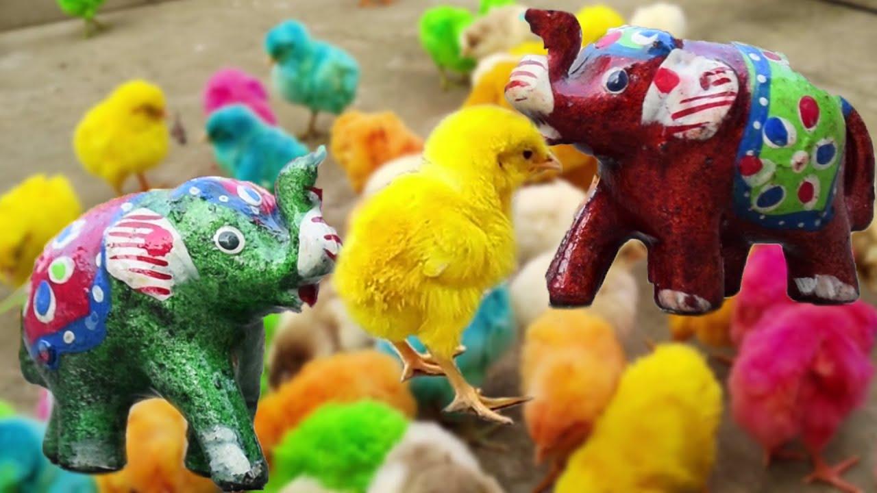 CUTE Hen MURGI Chicks Vs Elephant Toy Video | Murgi ke Bacche Chicks | Hen Video | FishCutting