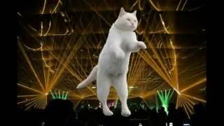 Смешные, танцующие коты.