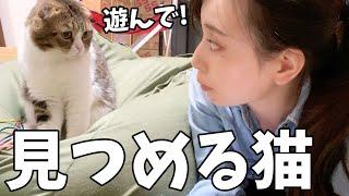 Amazonプライムデーをチェックするママに熱視線を送る猫