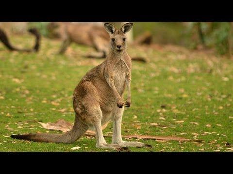 One Australia